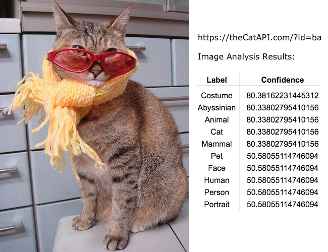 Image showing results from AWS Rekognition for a Cat picture